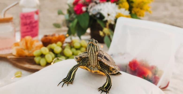 maak je schildpad blij
