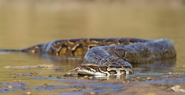anaconda slang