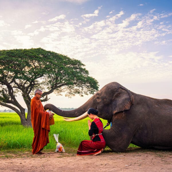heilige olifant dieren
