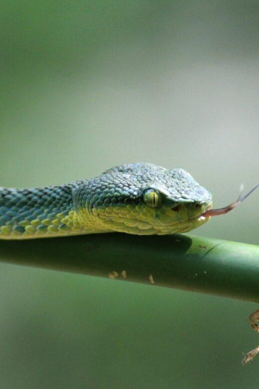 Slangen in Nederland