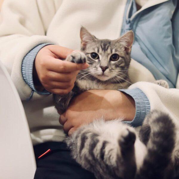 Huisdierenverzekering