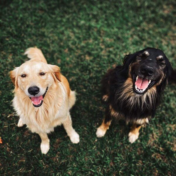 twee honden kijken lachend in de camera