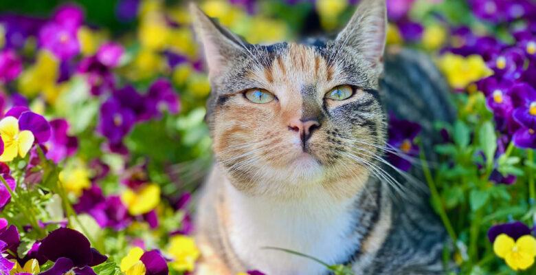 kat in een tuin